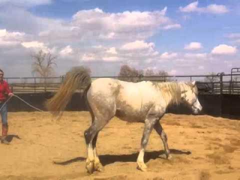 Colorado Horse Rescue: Leo - Day 1 at MRHT