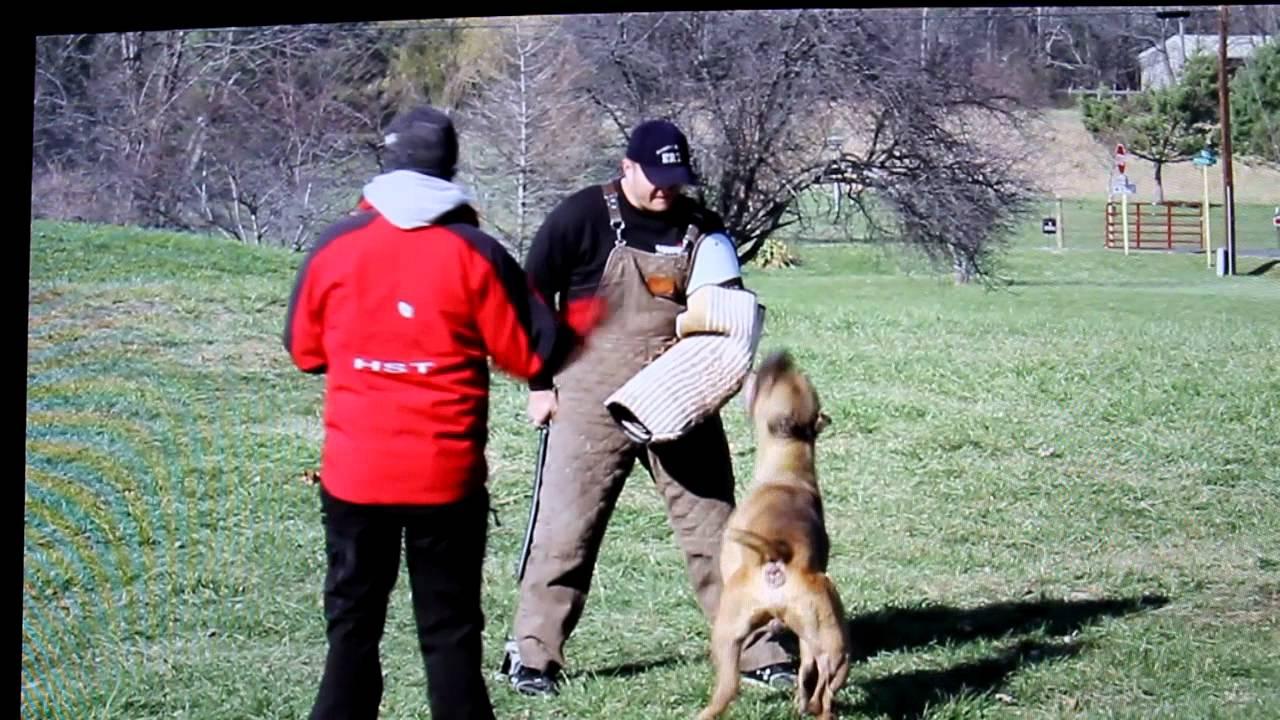 Schultzhund 3 same as ipo 3