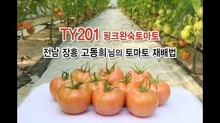 TY201 토마토 재배…