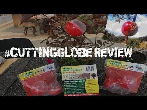 Cutting Globe Review-air layering propagate Cutting Globes Ireland