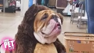 Funny Pet Costumes 😂 Compilation | Halloween Edition 👻
