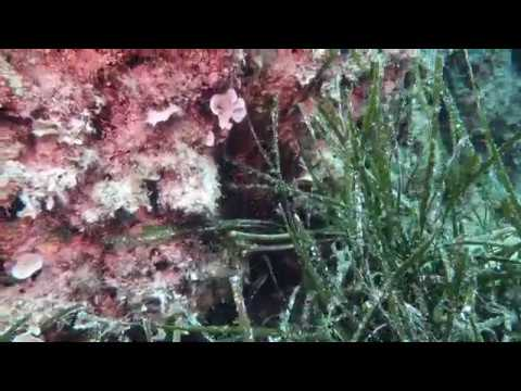 Lionfish hiding in Cyprus waters