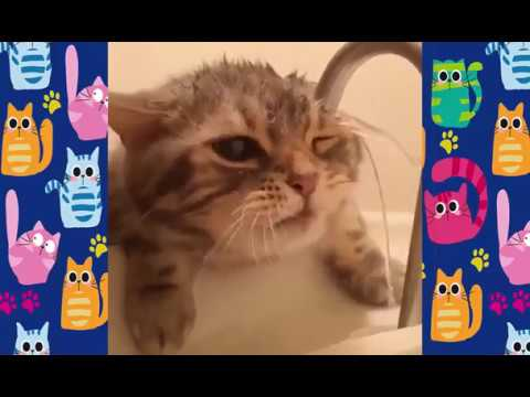 Funny cats compilation | Funny cat vines #hugyourcatday