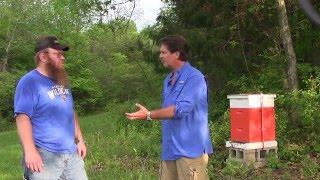 Salt Block Pork Chops, Harvest Cabins, Checking Bees And Good Foods Summer Kick-off (episode #209)