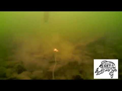 Bottom Bouncer Walleye & Pike-Underwater Video