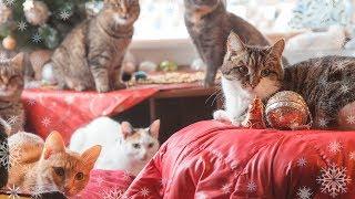 Новогоднее чудо в приюте для бездомных животных Дари добро animal shelter