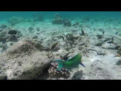 Day 1 Ellaidhoo Snorkeling Maldives GoPro hero5 black 4k ...