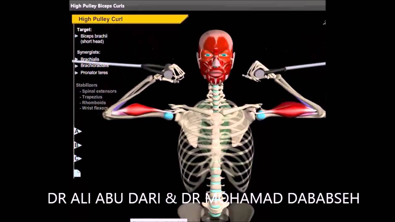 Biceps Anatomy Action Exercises Youtube