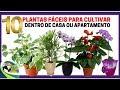 10 Plantas Fáceis Para Cultivar Dentro De Casa Ou Apartamento !!