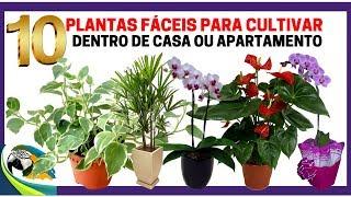 10 Plantas Fáceis para Cultivar Dentro de Casa ou Apartamento