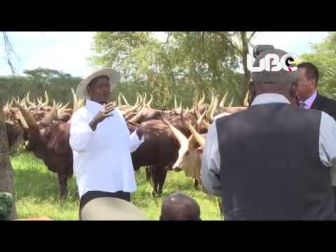 President Omar El-Bashir Bashir tours Museveni's farm in Kisozi, Gomba District before his departure