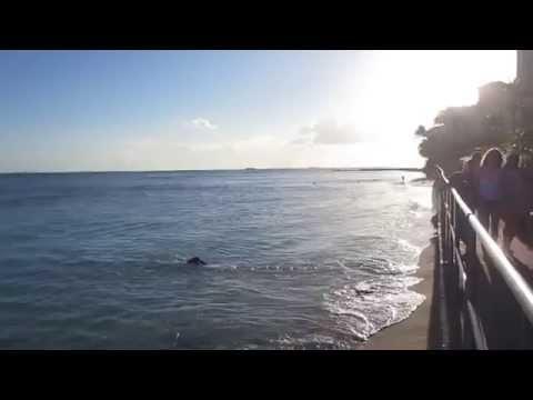 Waikiki Beach Sheraton Waikiki Hotel & Resort Honolulu Oahu Hawaii (June 2015)