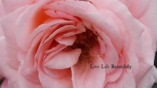 Beautiful Gifts from a Beautiful Friend♥ Thumbnail
