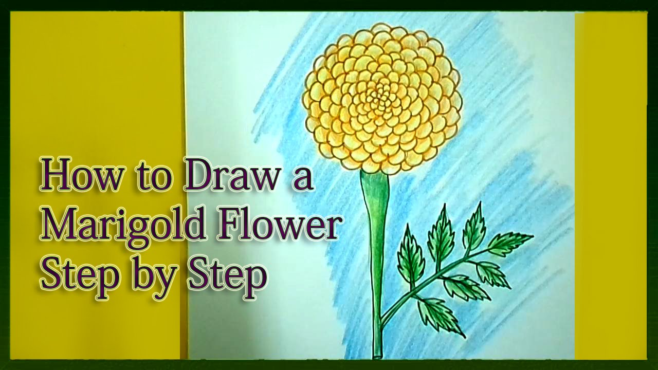 How to draw a marigold step by step youtube izmirmasajfo