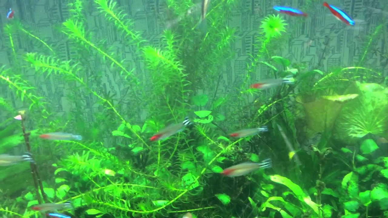 how to get rid of aquarium green water