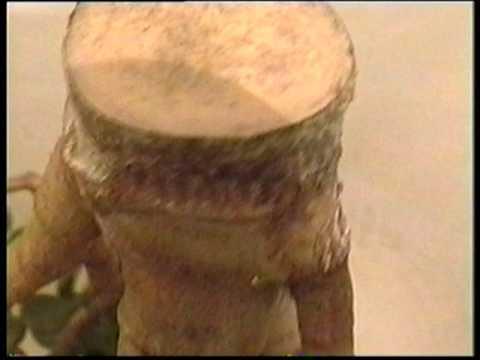 Вопрос: Чем заболело денежное дерево (см.фото)?