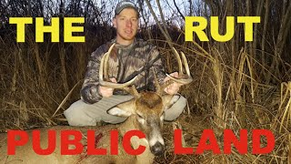 Public Land Bow Hunting Bucks During The Rut.