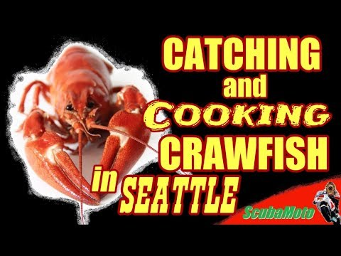 Catch N' Cook Crayfish In Seattle