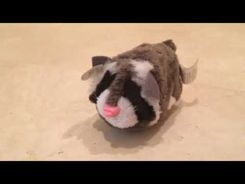 Zhu Zhu Pets - Rocco (RARE PINK NOSE VARIANT) Review