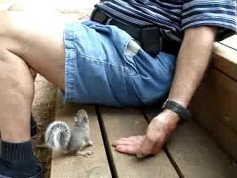 Friendly wild baby grey squirrel
