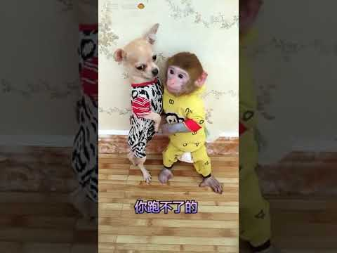 Baby monkey and dog puppies compilation