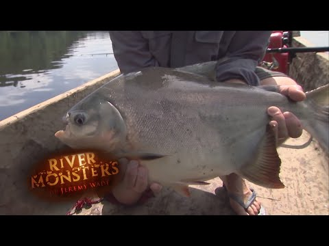 The Piranha's Angry Relative | PACU | River Monsters