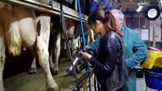 Traite des vaches laitières par Meriem Baba