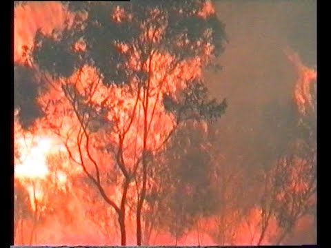 Surviving a bushfire front - Elanora Heights -January 1994