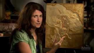 The Origin of Birds — HHMI BioInteractive Video