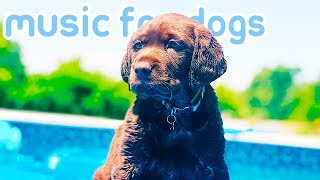 15 HOURS of Calming Deep Sleep Music for Dogs! NEW 2019!