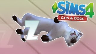 They Are So Cute! - The Sims 4: Cats & Dogs - Ep.1
