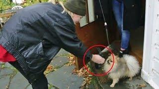 Her får hundeeieren smake sin egen medisin