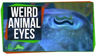 Repeat youtube video 9 Weird Ways Animals See the World
