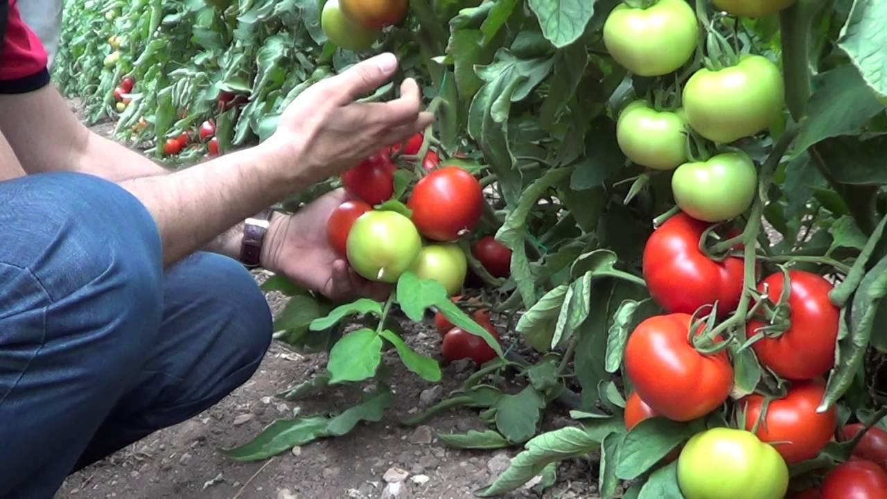 Sarılığa iyi Gelen Bitkiler Sebzeler Meyveler
