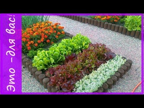 Видеозапись Декоративный  огород на даче.  Красивые грядки на даче.