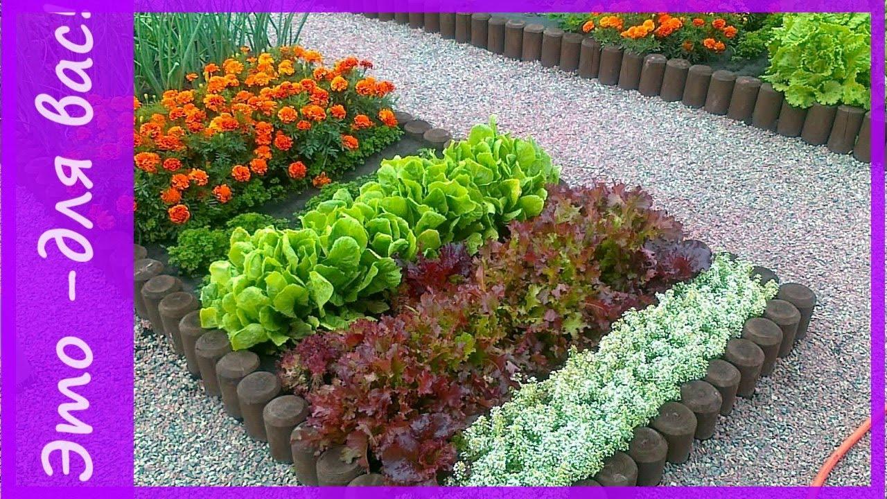 такого как красиво посадить пряную траву на саду фото тему