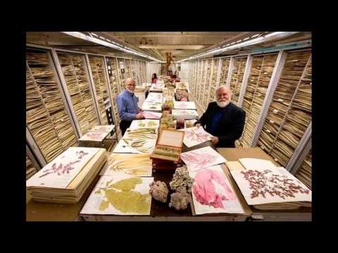 Museo nacional de historia natural smithsonian revela increíble colección