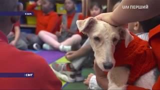 Американська школа взяла на роботу собак