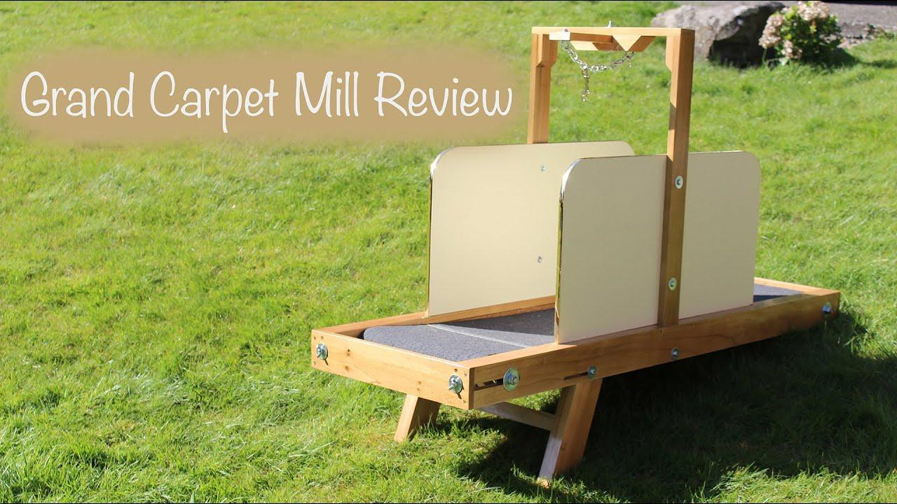 Grand Carpet Mill Dog Treadmill