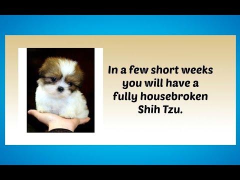 potty-training-your-shih-tzu-puppy:-4-different-housetraining-methods-potty-training-shih-tzus