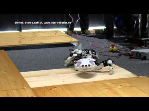 EPFL Pleurobot  Multimodal locomotion in a bioinspired robot