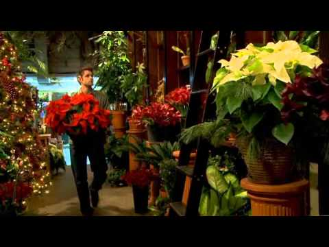 A worker's profile: a florist