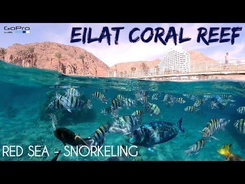 EILAT ISRAEL - SNORKELING IN THE RED SEA - GOPRO 7 - 2020