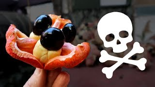 Una fruta MUY peligrosa
