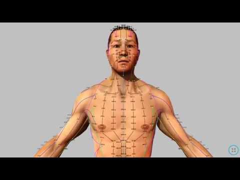 Visual Acupuncture 3D – Acupuncture App