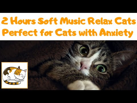 2 Hours Soft Music to Relax Cats and Kittens, Perfect for Cats with Anxiety Problems