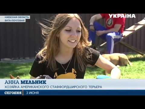 """Новости """"Strong Dog"""" & """"Wall Climbing"""" VIP-Колизей канал Украина 03 06 2017"""