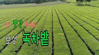 [드론여행 & 풍경] 보성 녹차밭