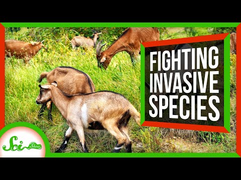 Weird Ways We've Fought Invasive Species