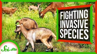 weird-ways-we-ve-fought-invasive-species
